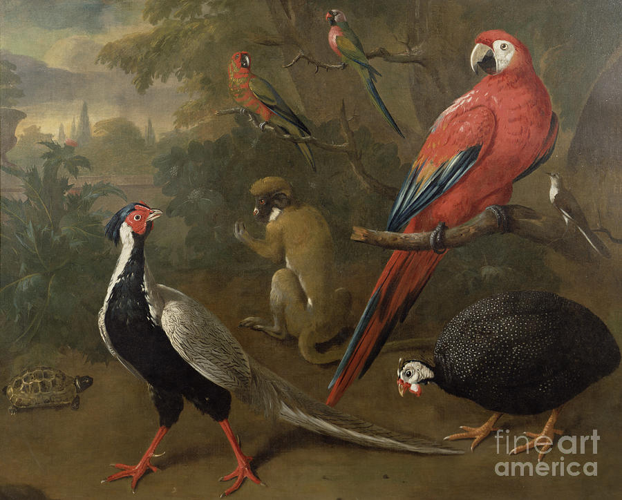 Pheasant Painting - Pheasant Macaw Monkey Parrots And Tortoise  by Charles Collins