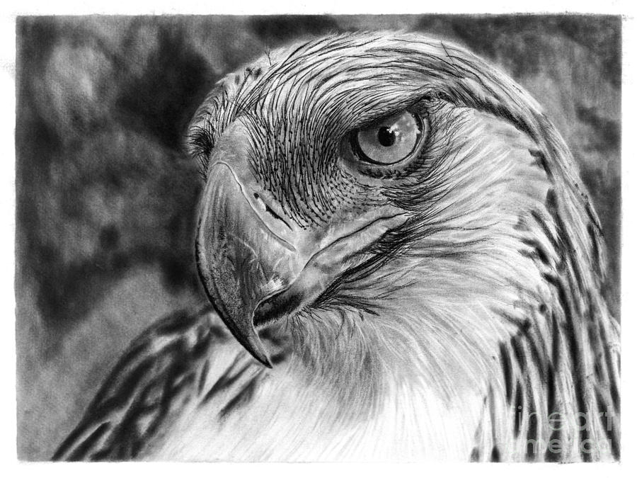 Philippine Eagle Drawing by PinayPencilArt