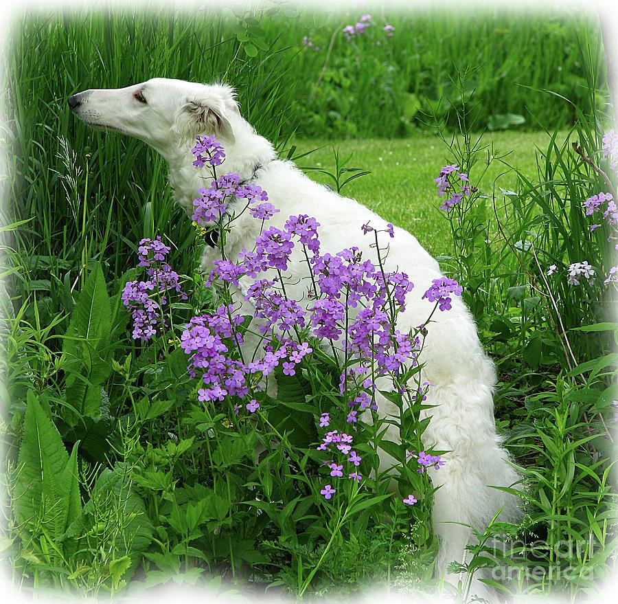 Dog Photograph - Phlox And Hound by Deborah Johnson