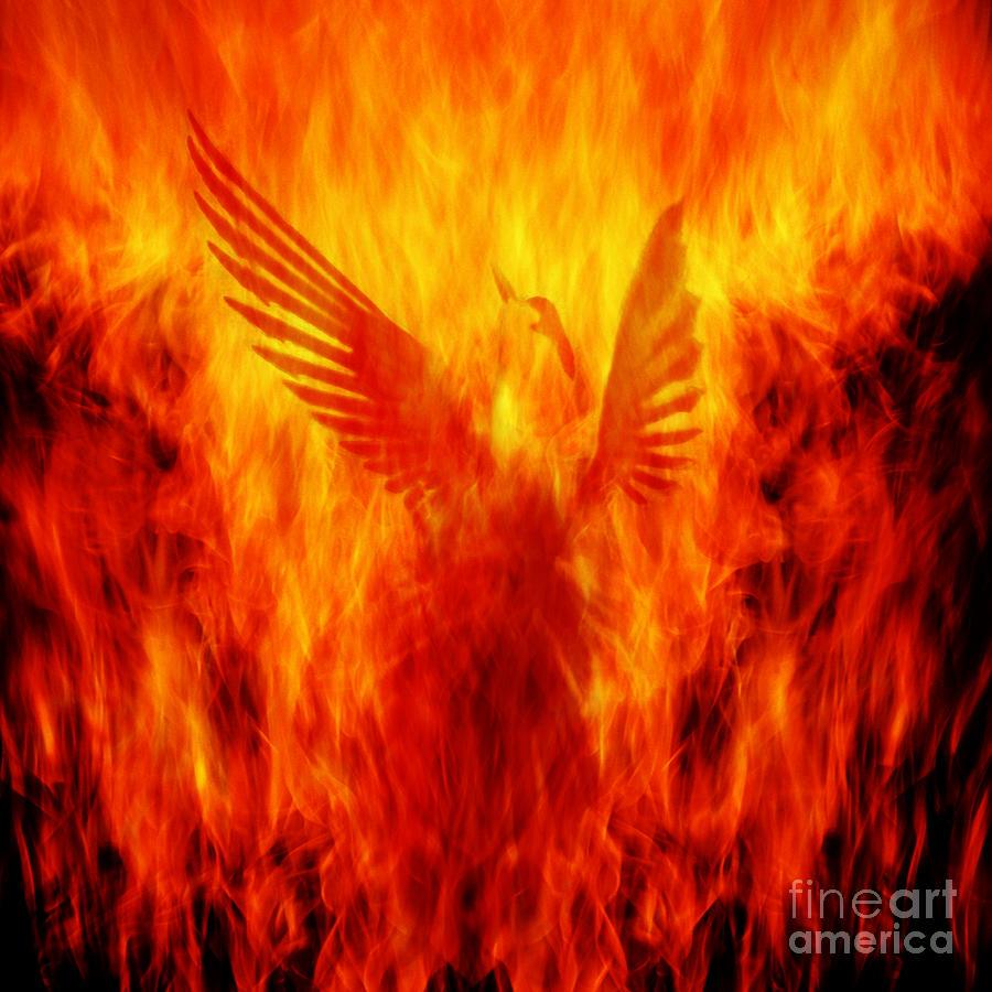Phoenix Photograph - Phoenix Rising by Andrew Paranavitana