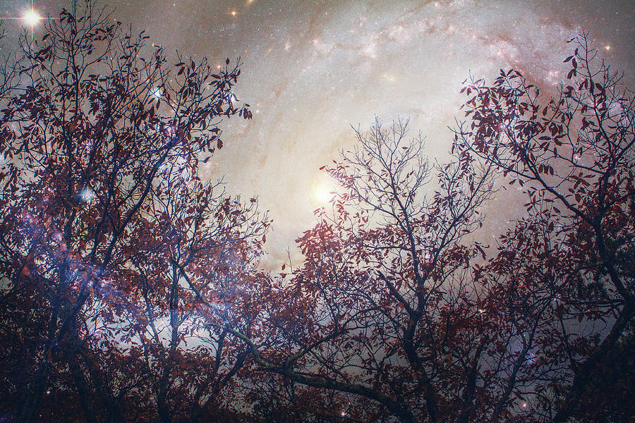 Photo Rendering of Trees and a Galaxy by Mela Luna