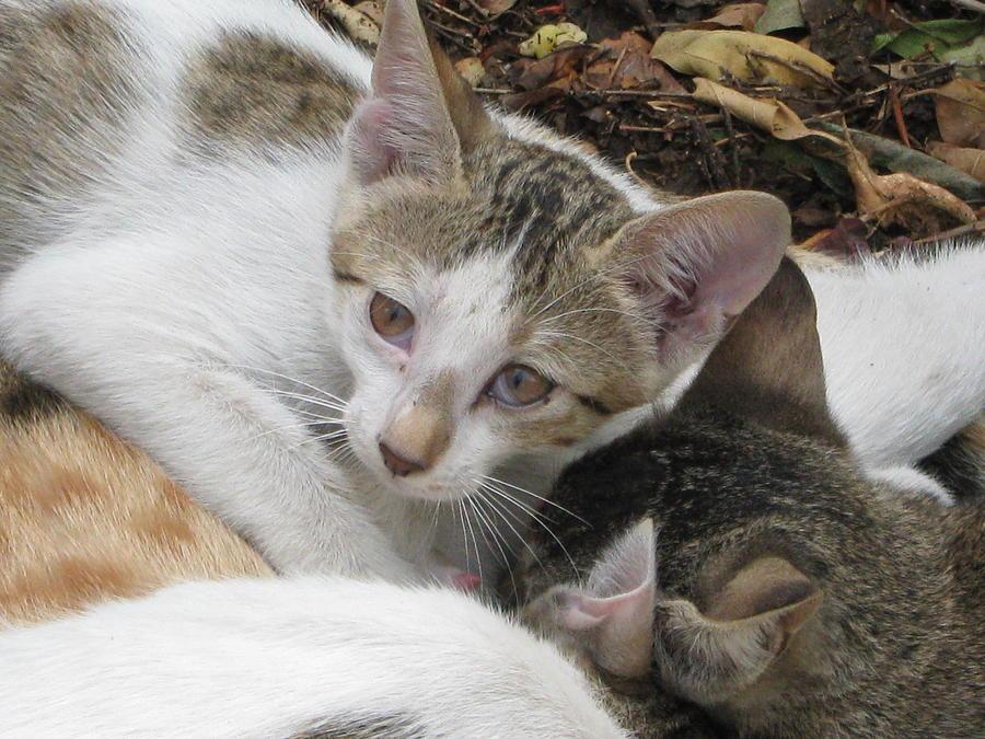 Photograph Of Cat Photograph by Gayatri Maheshwari