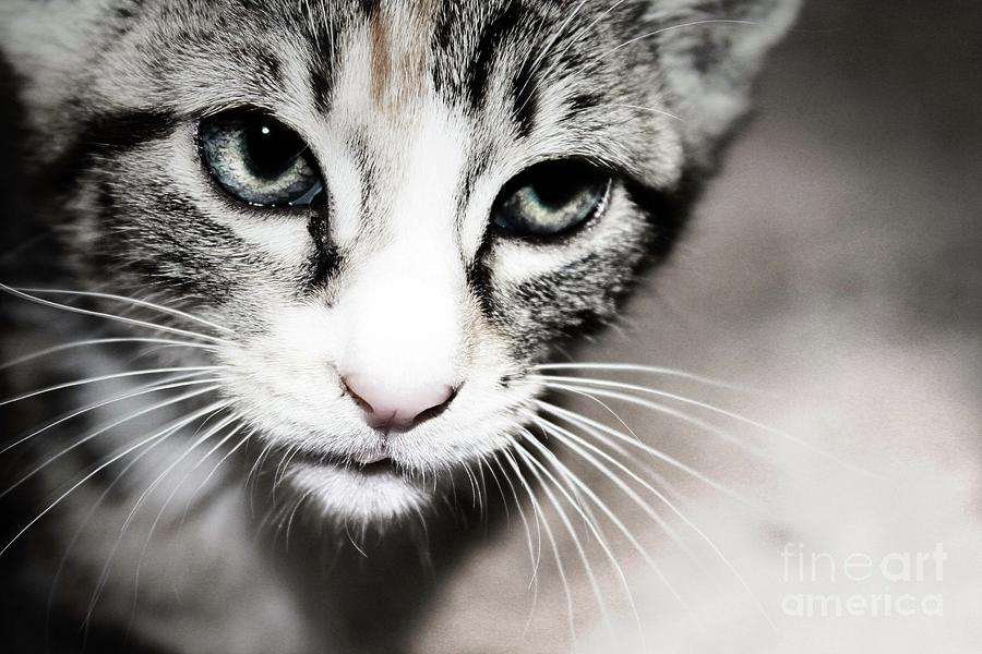 Kitten Photograph - Photography by Jayde Rowley