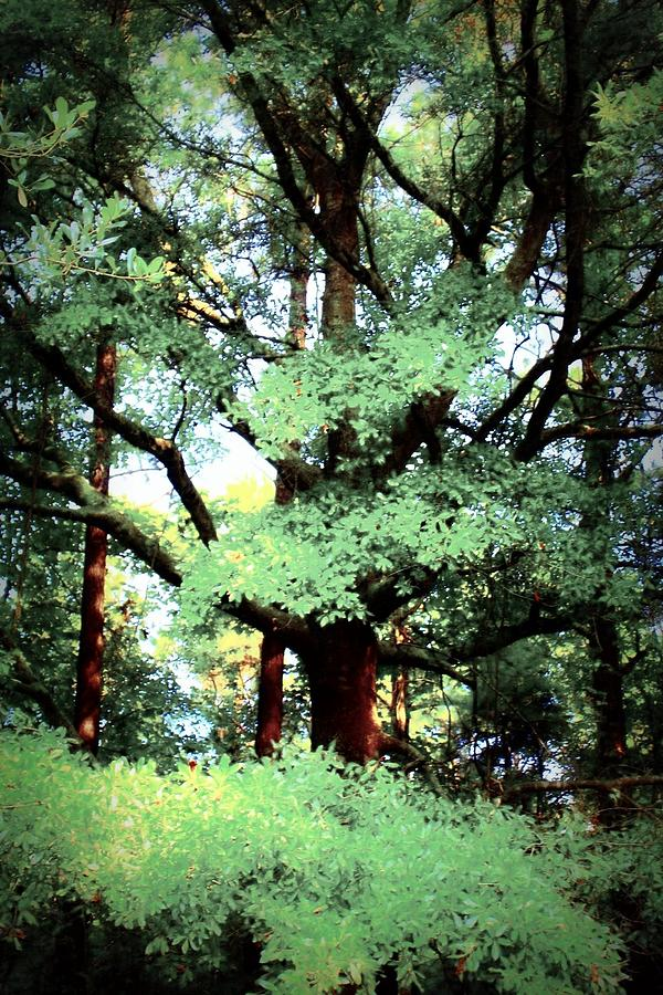 Tree Photograph - Photosynthesis by Jill Tennison