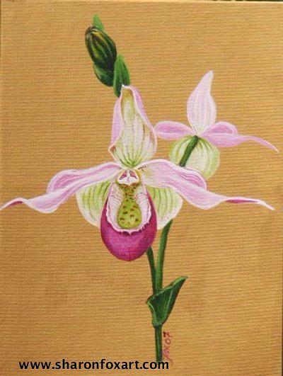 Floral Painting - Phragmipedium Sedenii by Sharon Fox-Mould