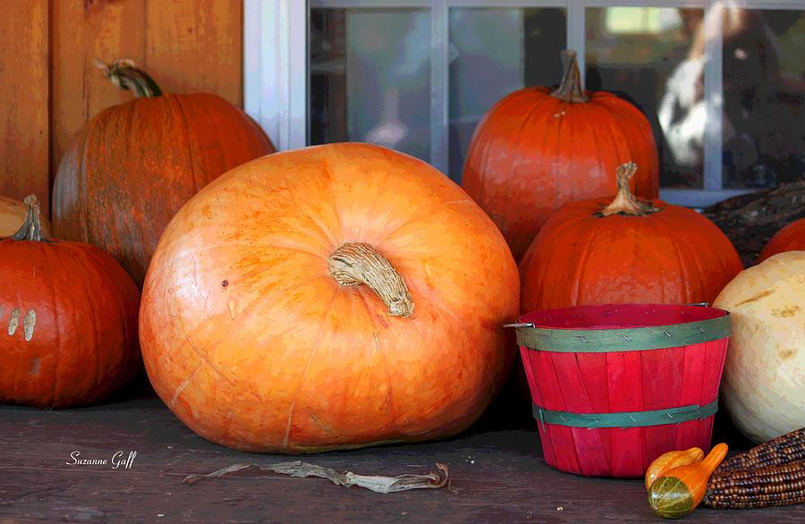 pick a pumpkin photograph by suzanne gaff