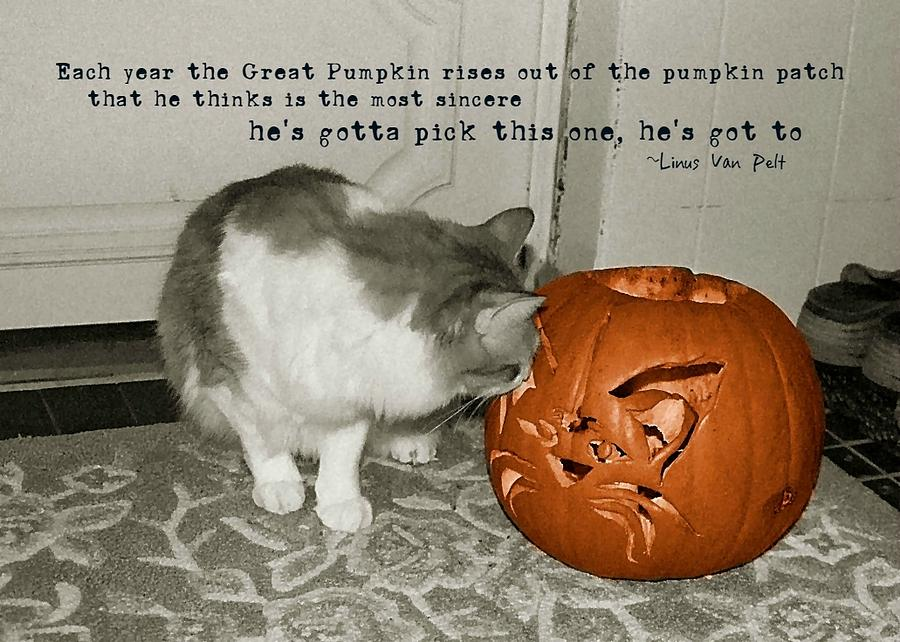Cat Photograph - Pick Me Pick Me Quote by JAMART Photography