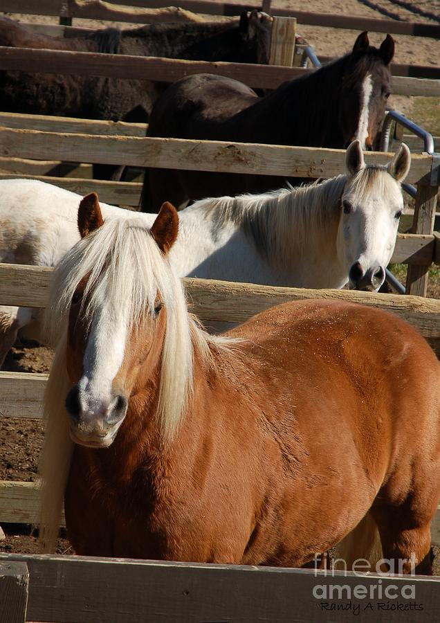 Horse Photograph - Pick One by Randy Ricketts
