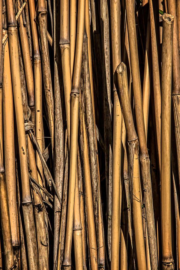 Pick-up Sticks Photograph - Pick-up Sticks by Odd Jeppesen