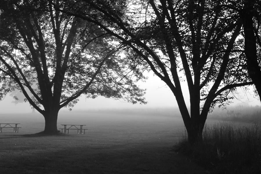 Fog Photograph - Picnic In The Fog by Lauri Novak