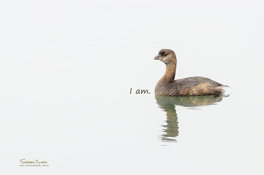 Pied-billed Grebe says I Am Photograph by Sherry Clark