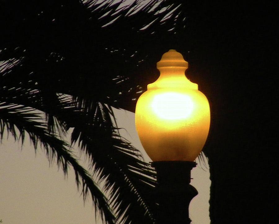 Santa Monica Pier Photograph - Pier Lamp by Wilma Stout
