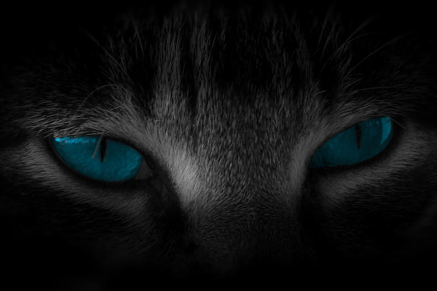 Cat Photograph - Piercing by Cecil Fuselier