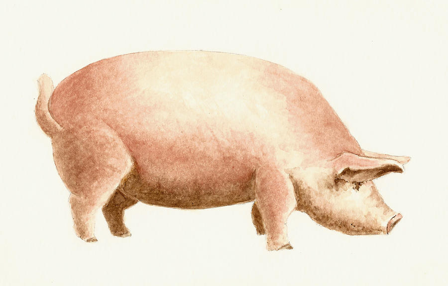 Animals Painting - Pig by Michael Vigliotti
