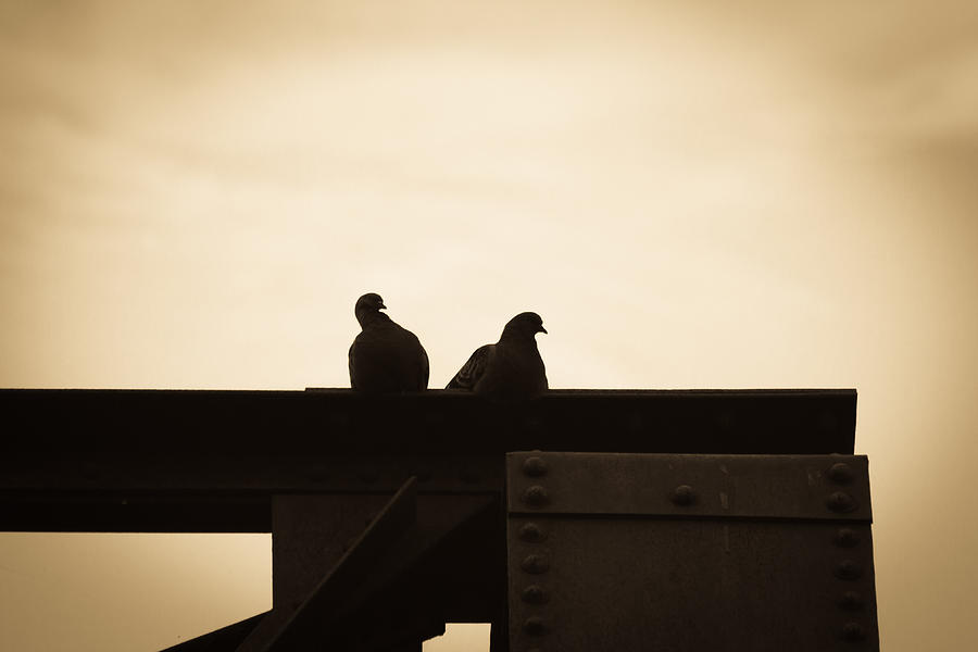 Silhouettes Photograph - Pigeon And Steel by Bob Orsillo