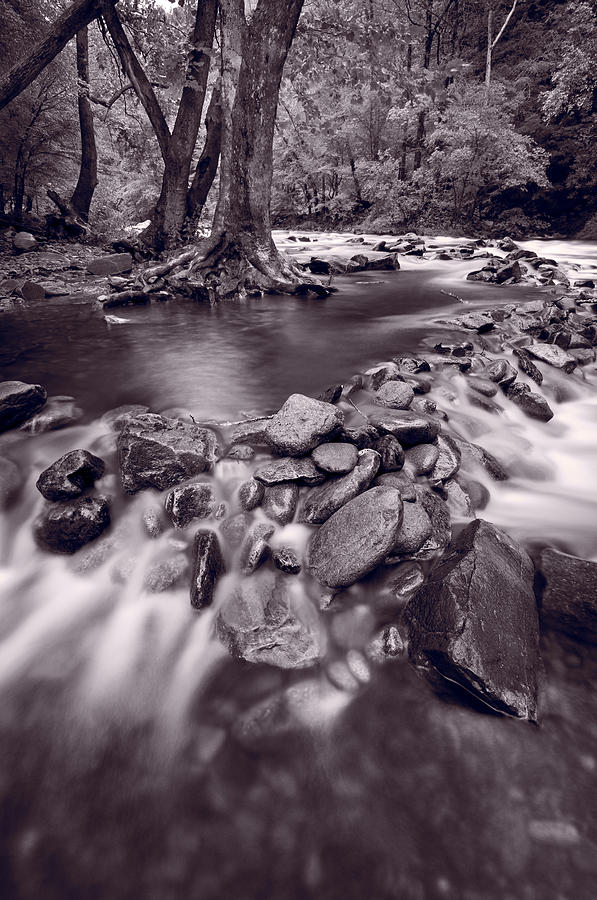 Great Photograph - Pigeon Forge River Great Smoky Mountains Bw by Steve Gadomski