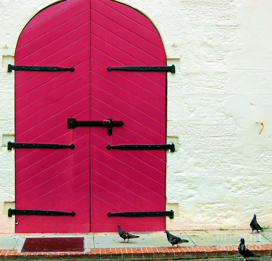 Birds Photograph - Pigeon Pink by Debbi Granruth