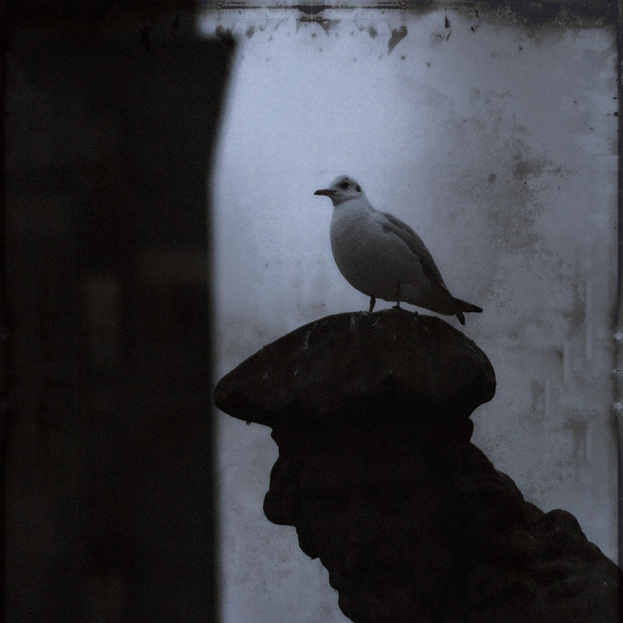 Pigeons Of Prague Photograph - Pigeons Of Prague by Sharon Coty