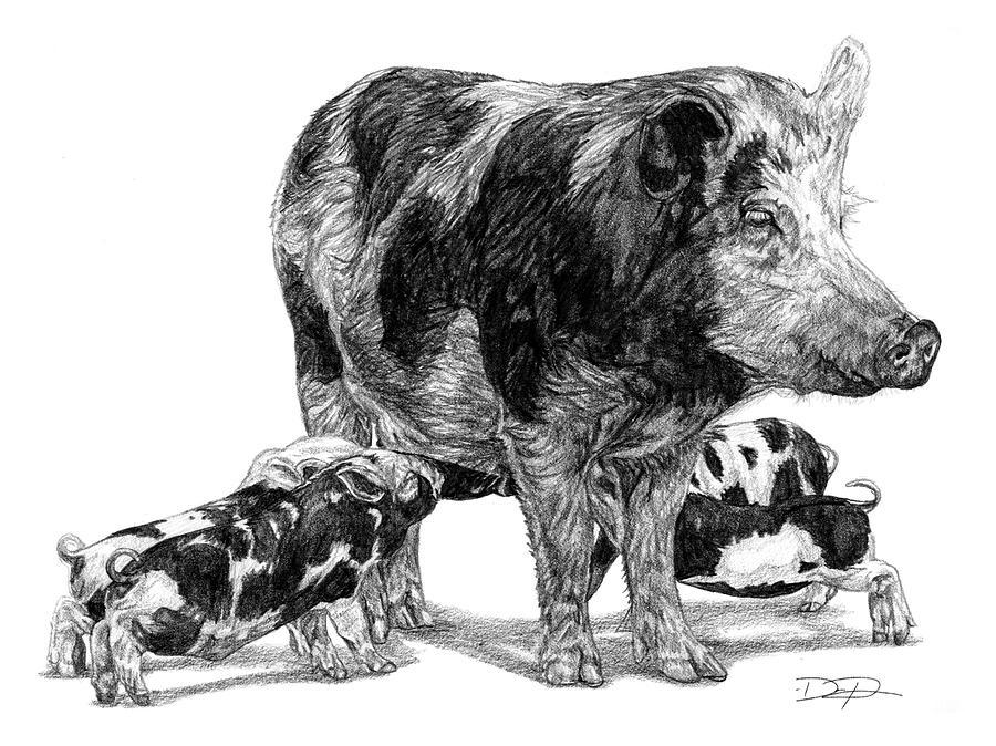 Pigs Drawing - Pigs by Dan Pearce