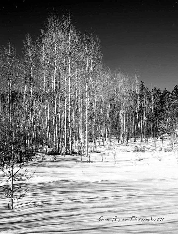 Landscape Photograph - Pikes Peak Aspens by Ernie Ferguson