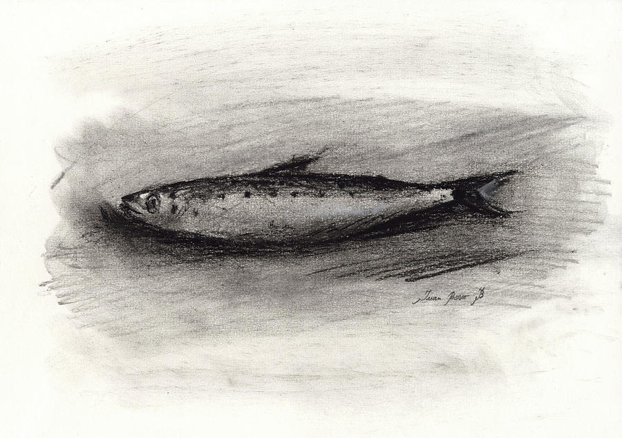 Charcoal Drawing Painting - Pilchard Drawing by Juan Bosco