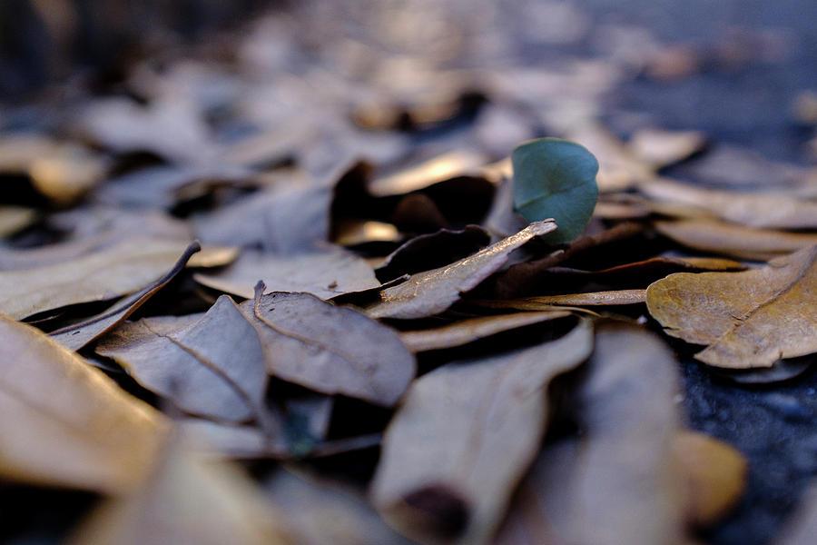 Pile Of Leaves At Dusk In Savannah Georgia by John McLenaghan