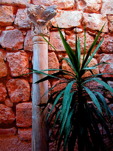 Still Life Photograph - Pillar And Palm by Mitch Messmore