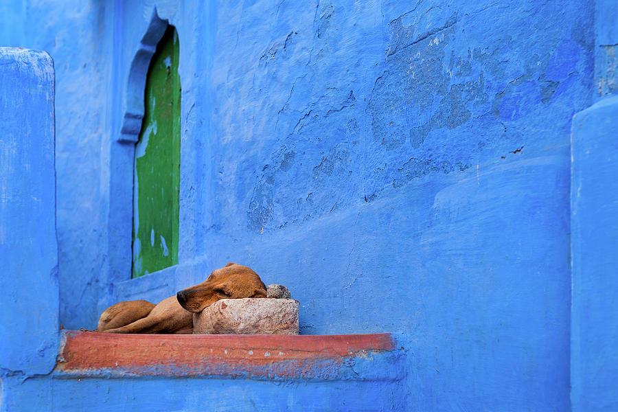India Photograph - Pillow by Marji Lang