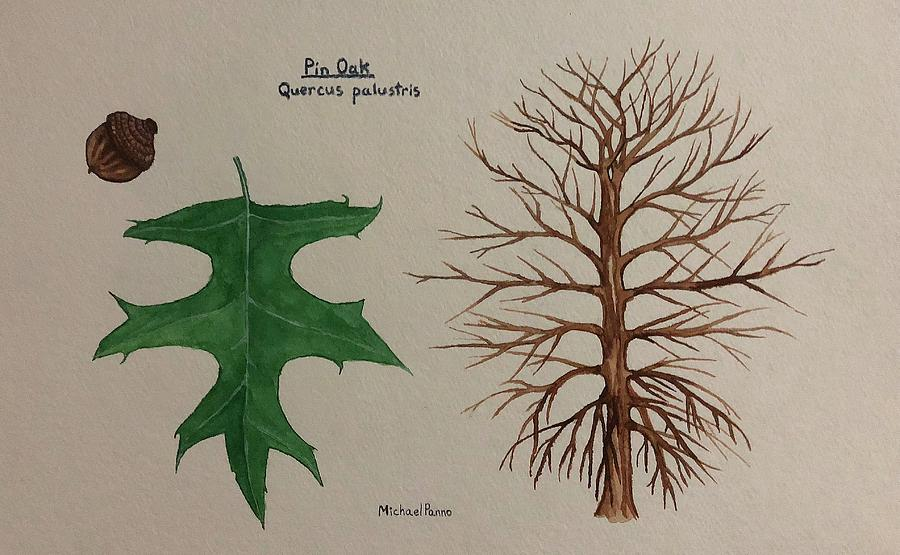 Nature Painting - Pin Oak Tree Id by Michael Panno