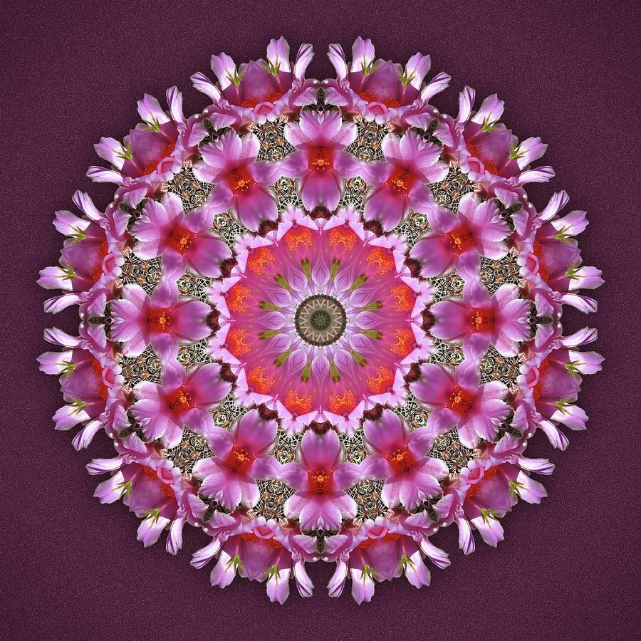 Pincushion Cactus Blossom by Martha Miller