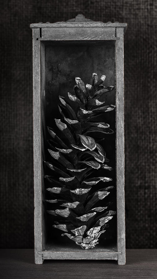 Pine Cone Photograph - Pine Cone in a Box Still Life by Tom Mc Nemar