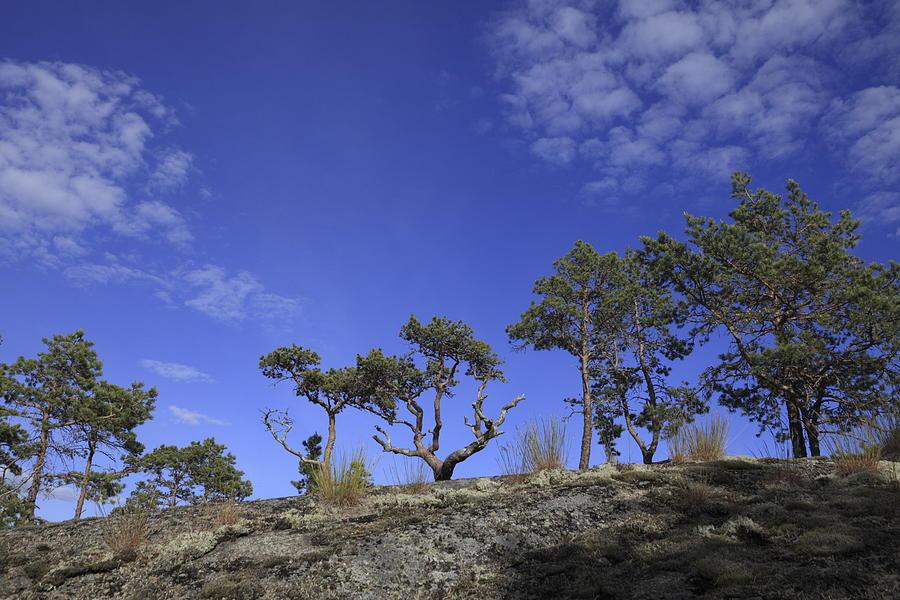 Blue Photograph - Pine Grove by Ulrich Kunst And Bettina Scheidulin