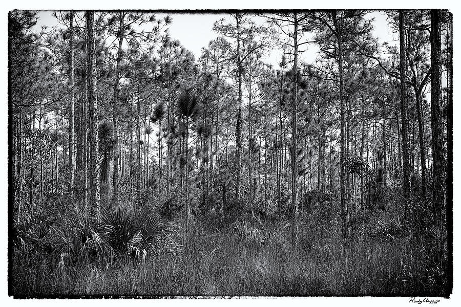 Everglades Photograph - Pine Land In B/w by Rudy Umans