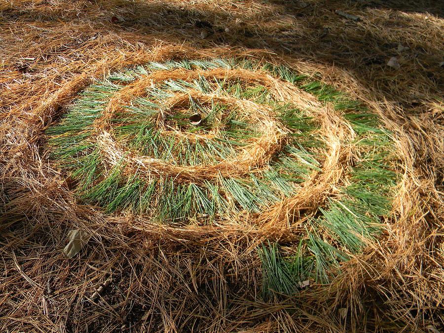 Art In Nature Sculpture - Pine Needle Nautilus by David  Maynard