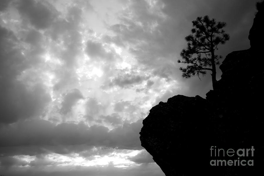 Pine Photograph - Pine Silhouette by Idaho Scenic Images Linda Lantzy