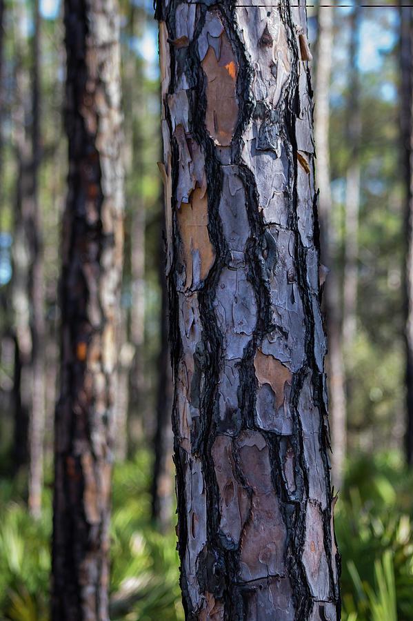 Pine Photograph - Pine Tree Bark by By Way of Karma