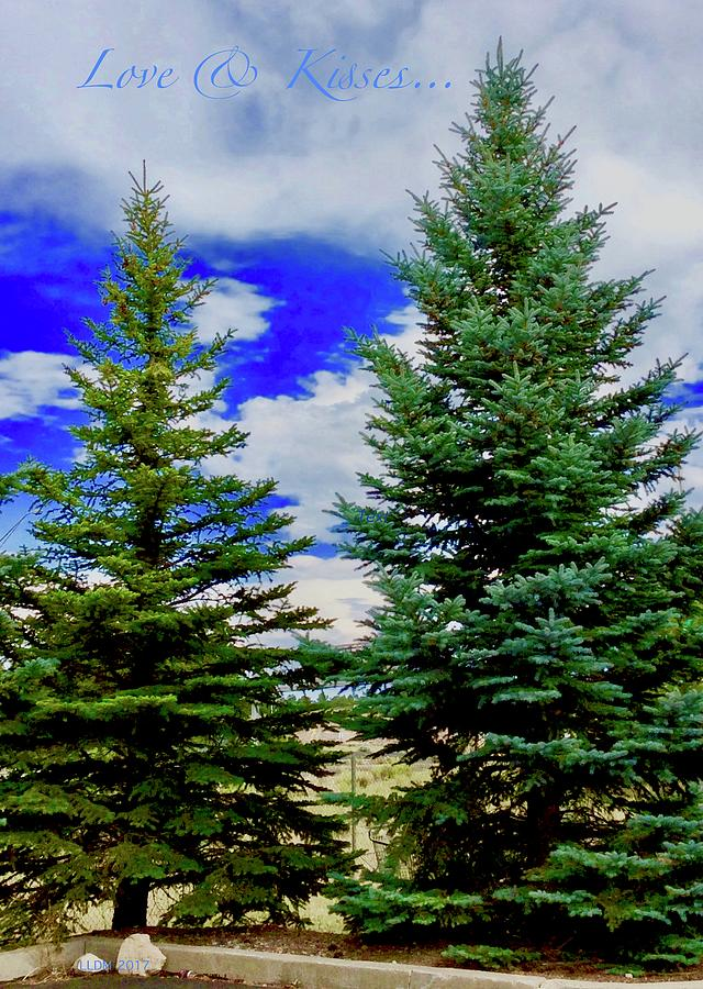 Pine Tree Photograph
