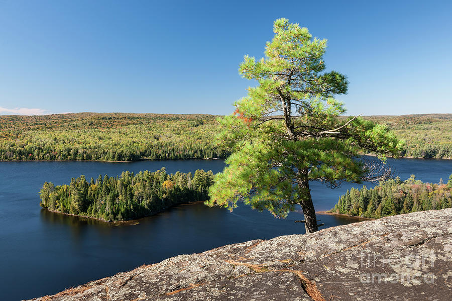 Pine Photograph - Pine Tree With A View by Elena Elisseeva