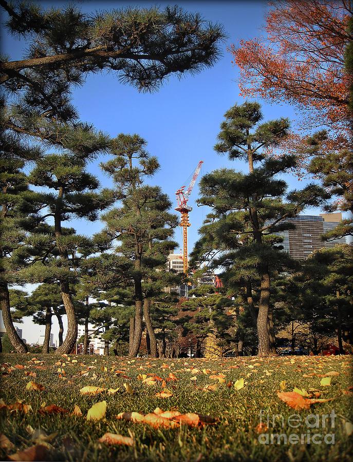 Pine Trees by Eena Bo