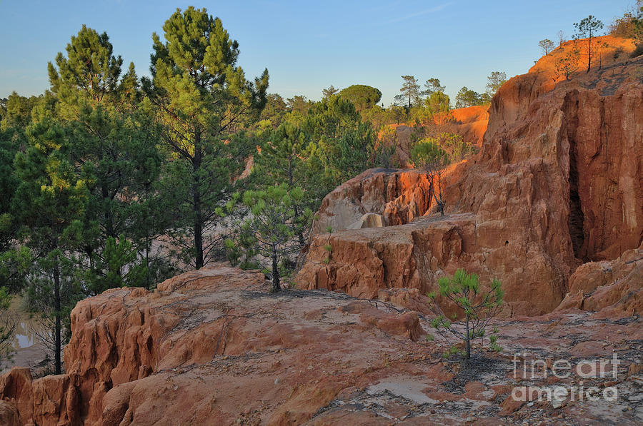 Trees Photograph - Pine Trees On Red Cliffs by Angelo DeVal
