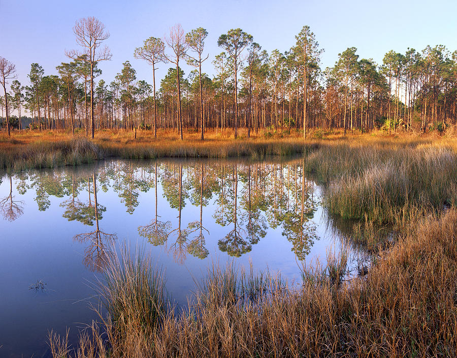Pine trees reflected in pond near piney photograph by tim for Pond equipment near me