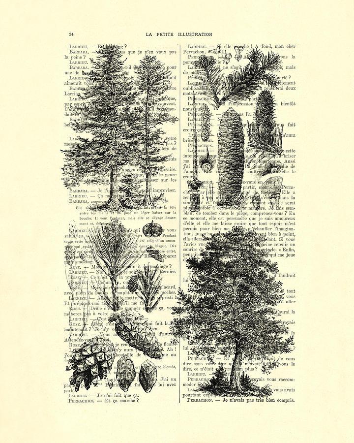 Pine Digital Art - Pine Trees Study Black And White  by Madame Memento