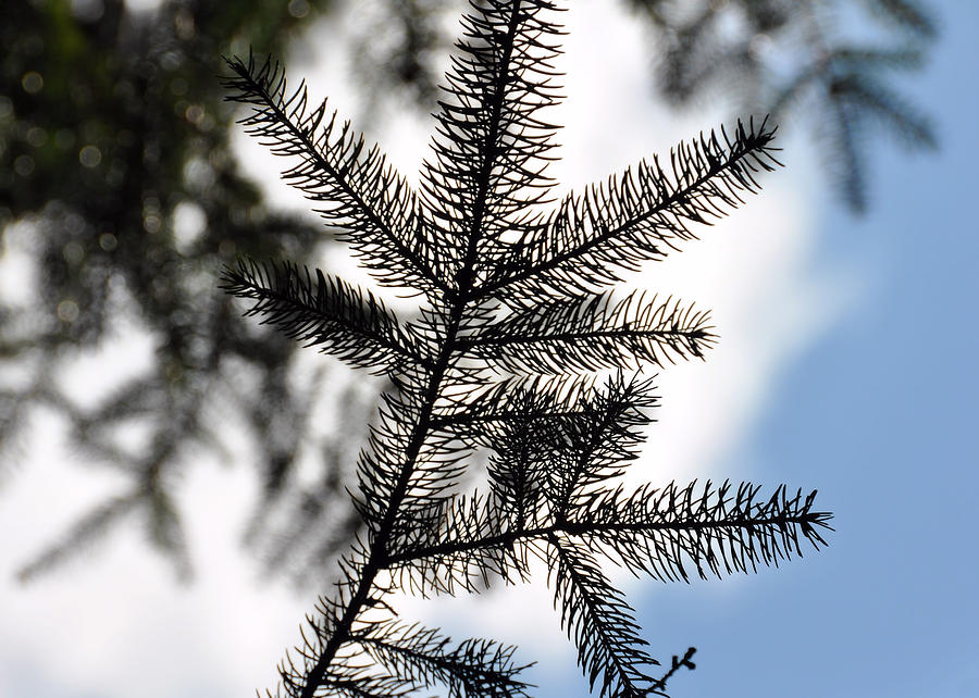 Pine Photograph - Pine View by JAMART Photography