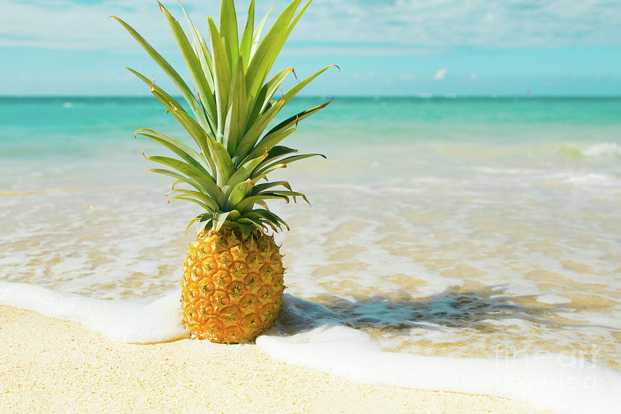 Pineapple Beach by Sharon Mau