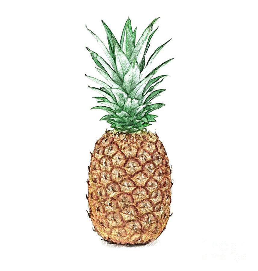 Pineapple Pencil Digital Art by Jennifer Capo