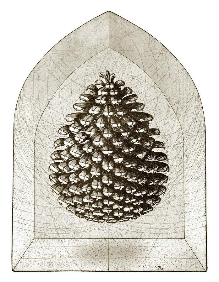 Pine Cone Drawing - Pine Cone by Charles Harden