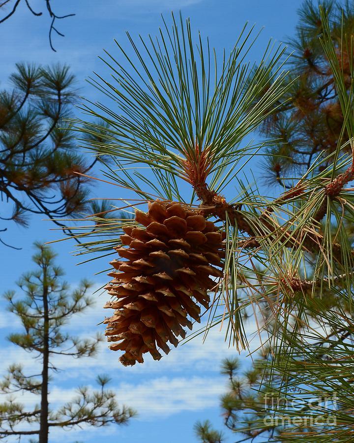 Pinecone by Patrick Witz