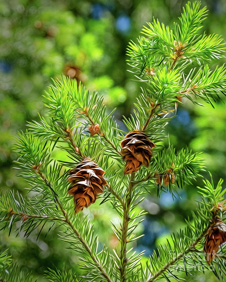 Green Digital Art - Pinecones by Mellissa Ray
