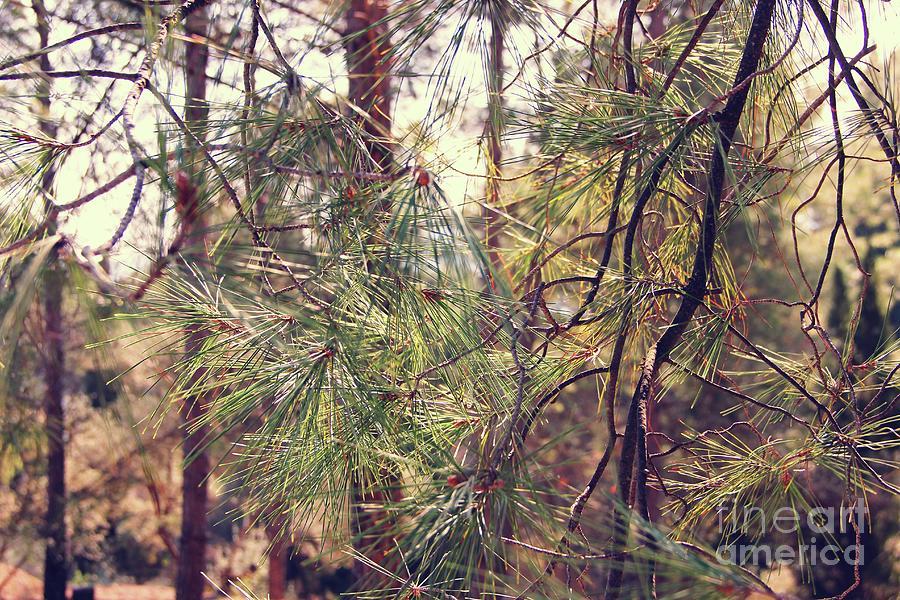 Pineforest by Jackie Mestrom
