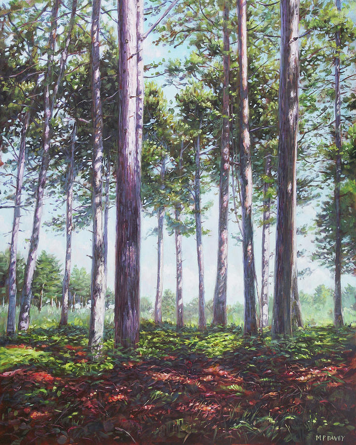 Countryside Painting - Pines In New Forest Shade by Martin Davey